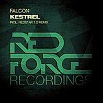 Falcon Kestrel