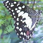Warren Kime Butterfly Man