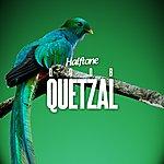 Doob Quetzal