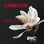 Crimson Magnolia