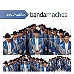 Banda Machos Mis Favoritas