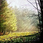 Rhian Sheehan Borrowing The Past (Hammock Remix) - Single