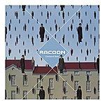Racoon Liverpool Rain