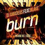 DJ Amadeus Burn