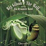 Big Gilson Chrysalis