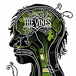 The Vines Anysound