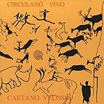 Caetano Veloso Circulado Vivo