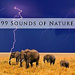 Nature 99 Sounds Of Nature