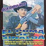El Puma De Sinaloa Aca Entre Nos
