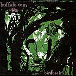Buffalo Tom Birdbrain