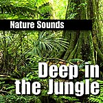Nature Sounds Deep In The Jungle