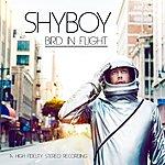 Shyboy Bird In Flight