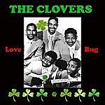 The Clovers Love Bug