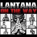 Lantana All Hustle No Luck