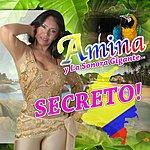 Amina Secreto