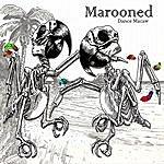 Marooned Dance Macaw