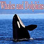 Nature Sounds Whales And Dolphins - Sounds Of Nature