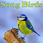 Nature Sounds Song Birds - Sounds Of Nature