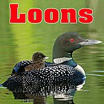 Nature Sounds Loons - Sounds Of Nature