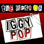 Iggy Pop The Best Of Iggy Pop