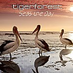 Tiger Forest Seas The Day