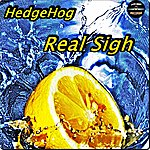 Hedgehog Real Sigh