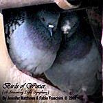 Jennifer Matthews Birds Of Winter (A Streaming Light Symphony)