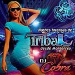 DJ Cobra Noches Intensas De Tribal Desde Monterrey