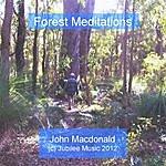 John MacDonald Forest Meditations