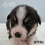 Leslie Skyfall