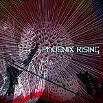 Gallo Phoenix Rising