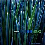 David Scott Dark Blue Grass