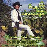 El Puma De Sinaloa Tristes Recuerdos
