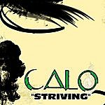 Calo Striving