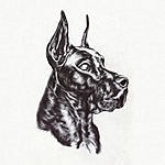 Great Dane Alpha Dog
