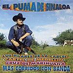 El Puma De Sinaloa Los Pilares De La Carcel