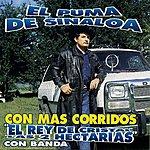 El Puma De Sinaloa Las 2 Hectareas - Más Corridos