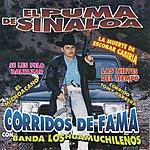 El Puma De Sinaloa Corridos De Fama Con Banda Los Huamuchileños