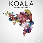 Koala Introspective
