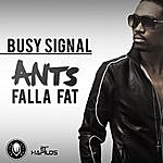 Busy Signal Ants Falla Fat - Single
