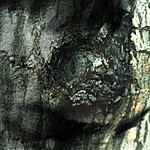 Yann Tiersen The Waltz Of The Monsters