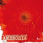 A Reminiscent Drive Ambrosia