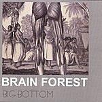 Brain Forest Big Bottom