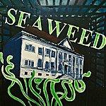 Seaweed Seaweed