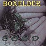 Boxelder Seed