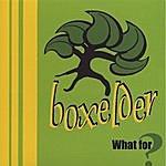 Boxelder What For?