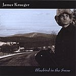James Krueger Bluebird In The Snow
