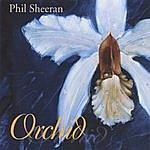 Phil Sheeran Orchid