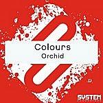 Colours Orchid - Single