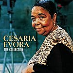 Cesaria Evora Cesaria Evora - Camden Collection